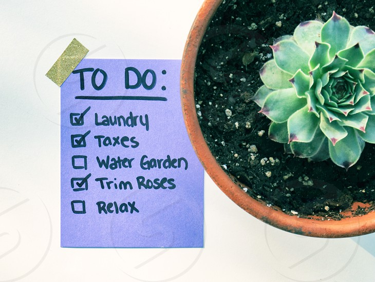 Purple paper to do list of work with succulent plant. photo