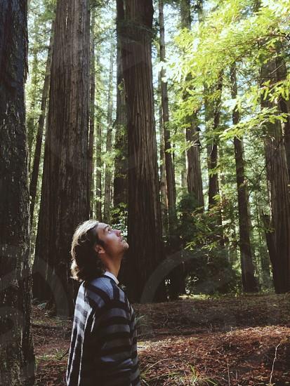 Redwoods hiking epic trees awestruck  photo