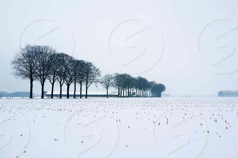 Wide winter landscape with snow covered fields trees and farm buildings photo