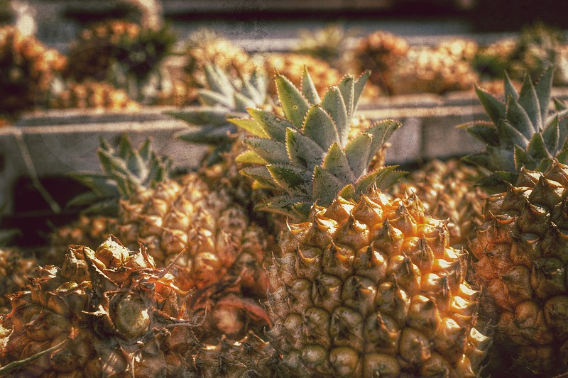 close up photo of pineapples during daytime photo