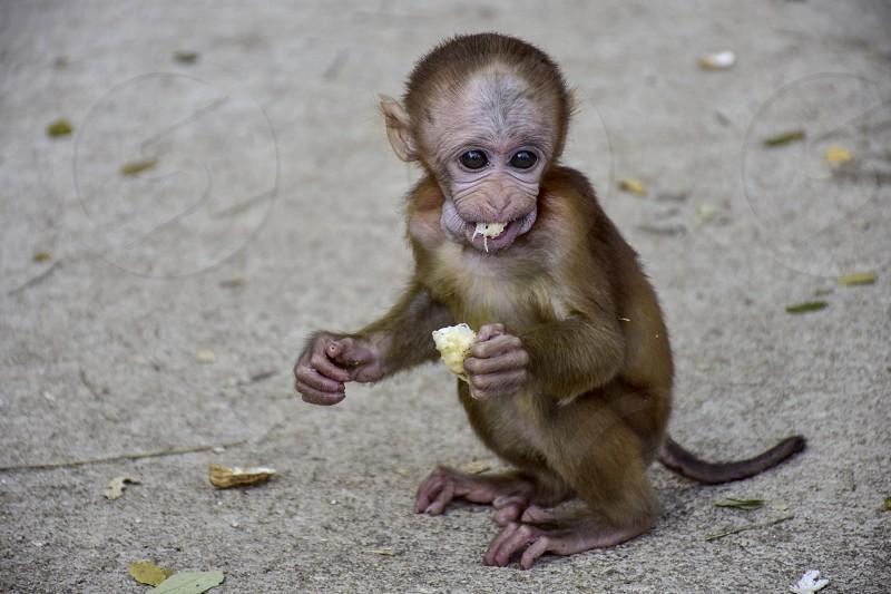 Baby monkey. photo