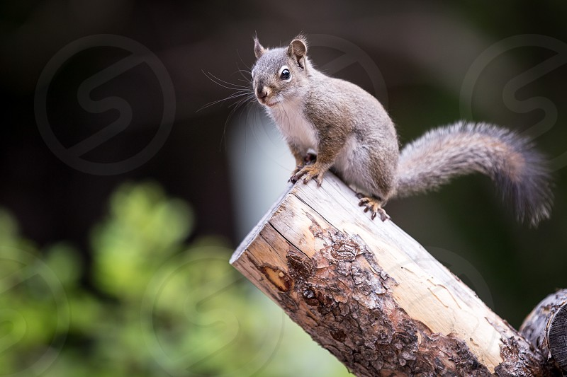 Squirrel woods animal forest cute photo