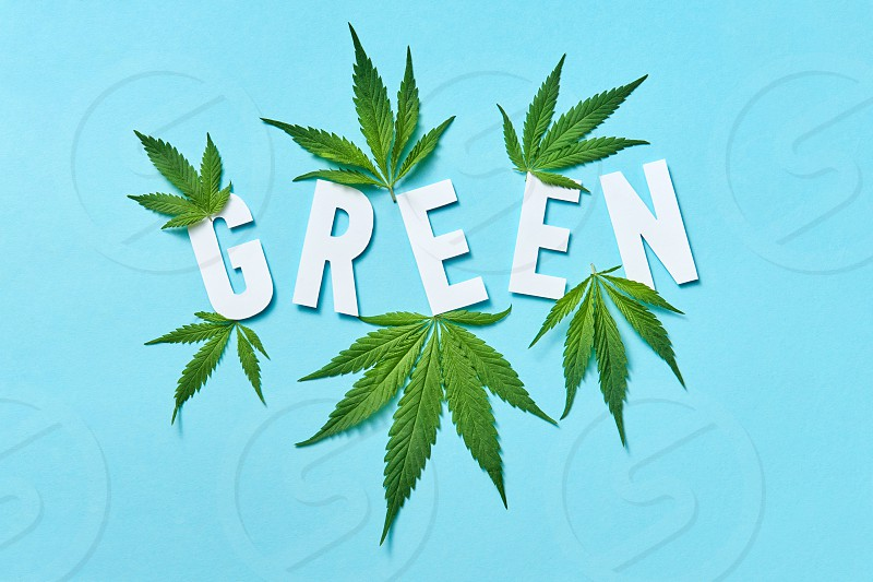 Plant pattern with leaf of cannabis and white paper letters Green on a light blue background. photo