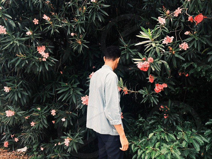man in white shirt and black pants near tree with coral flowers photo