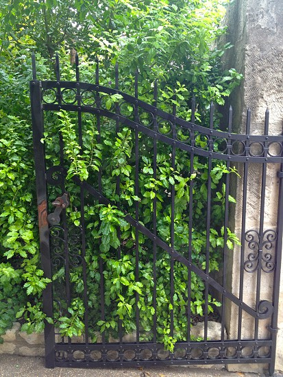 green leaf plant in front on black metal gate photo