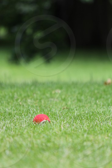red ball in the field photo