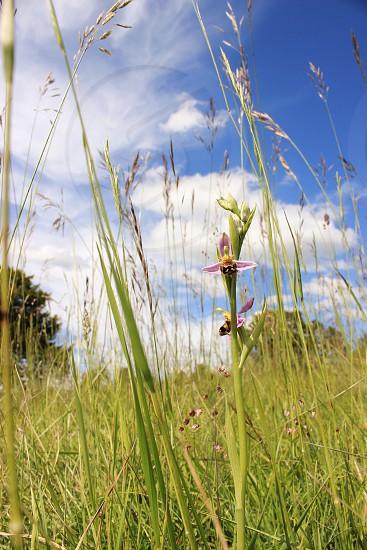 Box Hill England photo