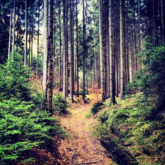 Road between trees in european forest photo