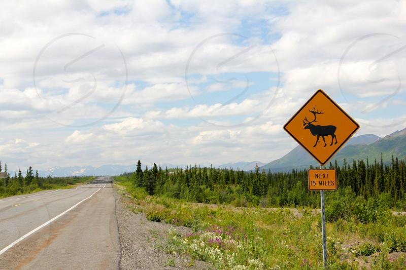 elk crossing sign photo