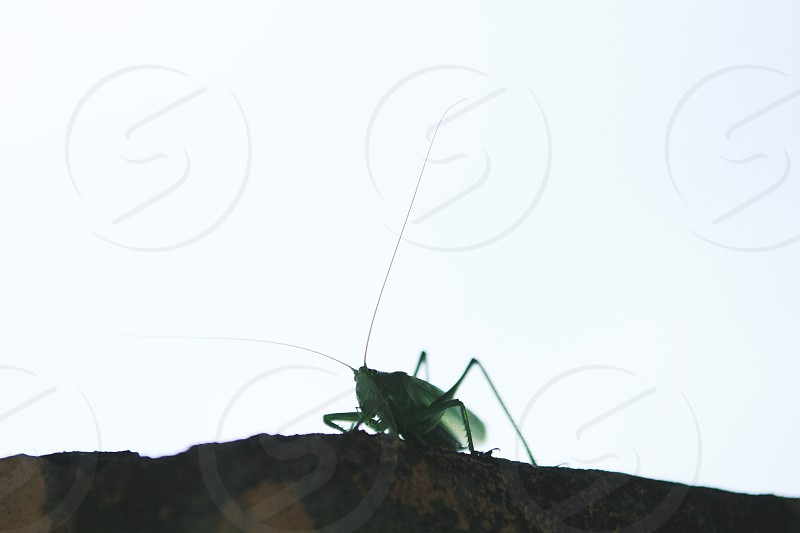 a grasshopper green insect space. photo