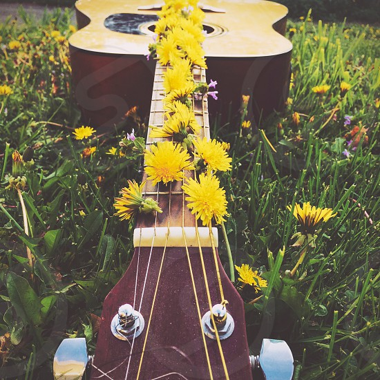 Guitar music earth nature earthy flowers flowerchild hippie beautiful beauty stunning still life Mother Nature  photo