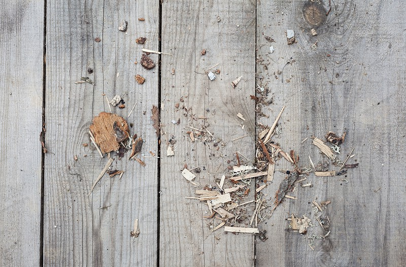 Texture of old wooden planks and some sawdust.  photo