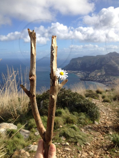 photo overlooking cliff in daytime with branch growing single daisy photo