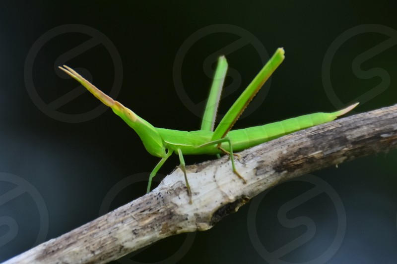 green insect on tree branch photo