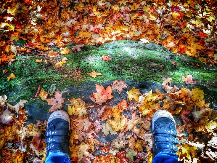 #mypointofview #fallishere #leaves #colors #change #hiking #loveit #favoriteseason photo