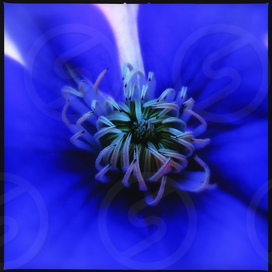blue flower with green polens macro photography photo