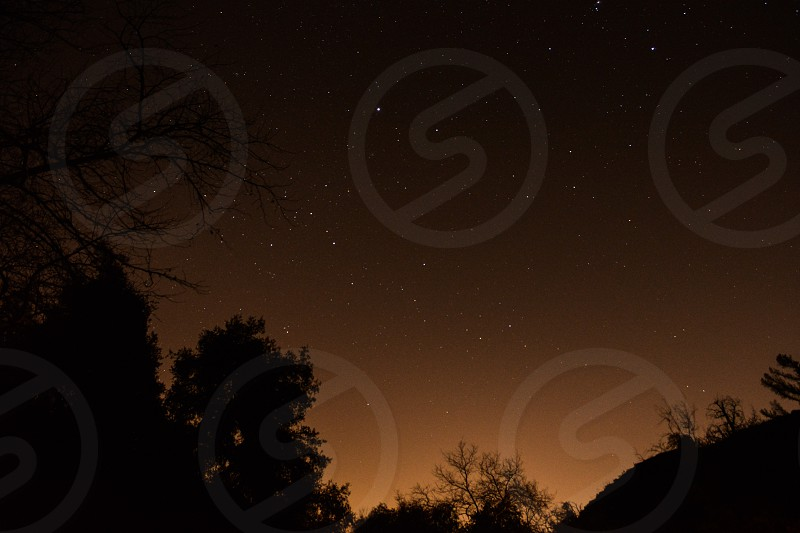 silhouette photo of trees with stars during nighttime photo