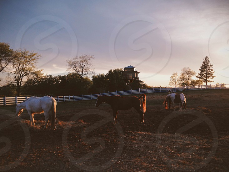 farm landscape with horses photo