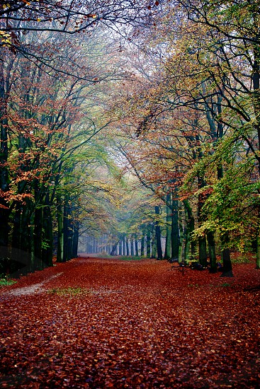 Color trees. Location: Lage Vuurse Netherlands photo