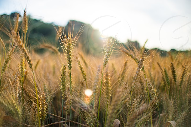 Agriculture at it's finest at the sunset on the field photo