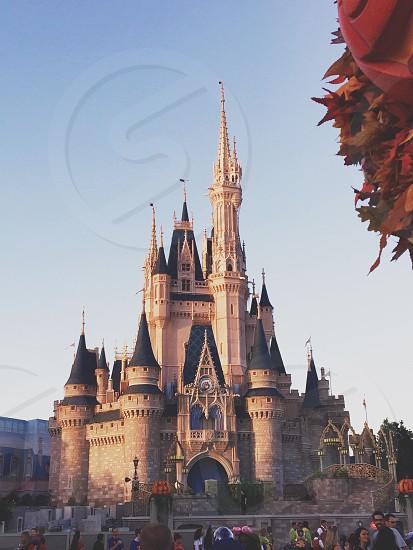 Fall at Disney fallamazingbeautybeautifulnaturetravel photo