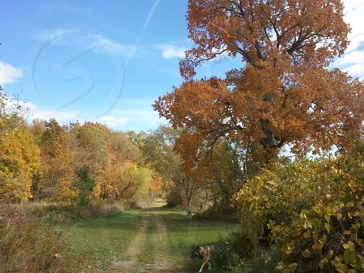 Trail through the autumn woods photo