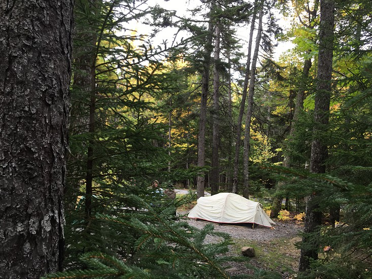 white camping tent in woods during daytime photo