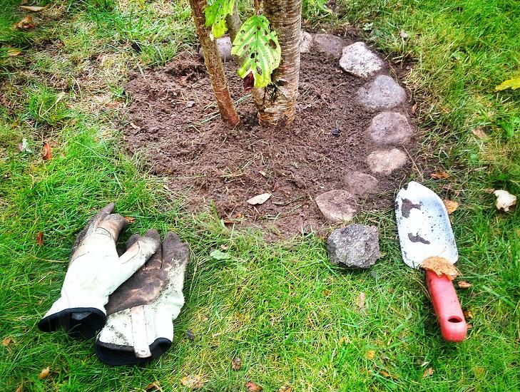 2 gardening gloves on the ground beside a garden spatila photo