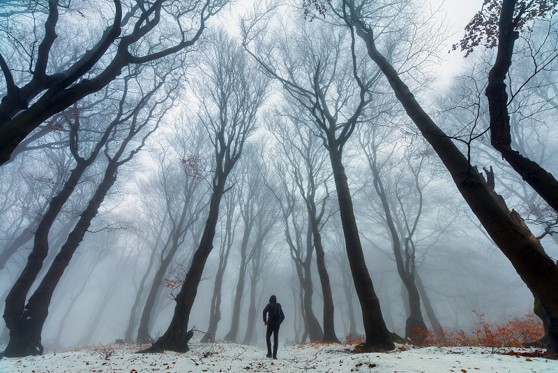 Man in snowy autumn misty forest on the road between beeches. photo