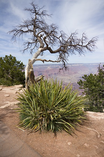 View over the Grand Canyon. photo