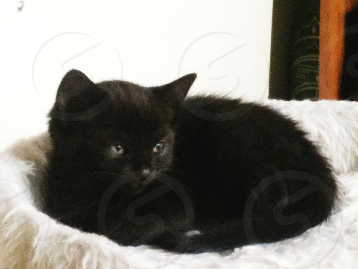 black kitten on a white cushion photo