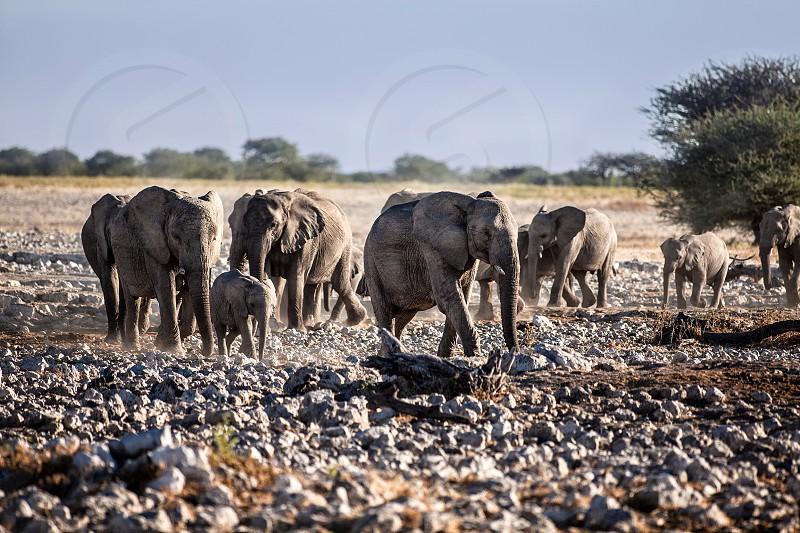 view of elephants photo