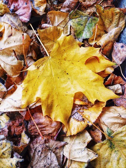 Fall colors are incredible. This leaf really stood out among the others. Used C1/Vibrant in VSCOcam! photo