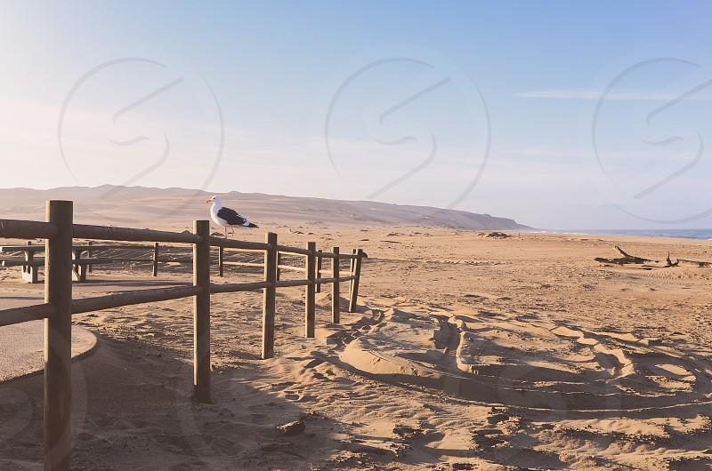 Seagull beach dunes landscape west coast stock photo