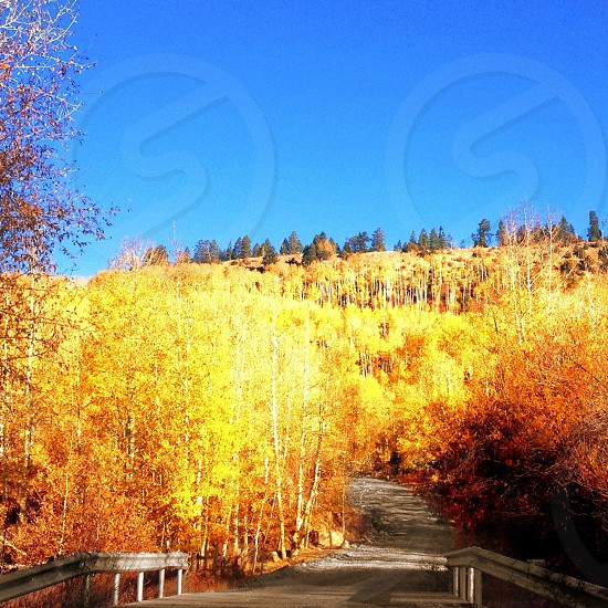 yellow leafy outdoor tree photo