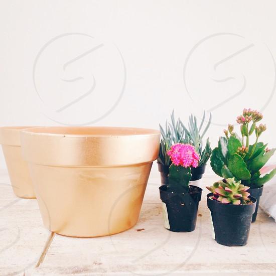 Succulents cactus plant photo