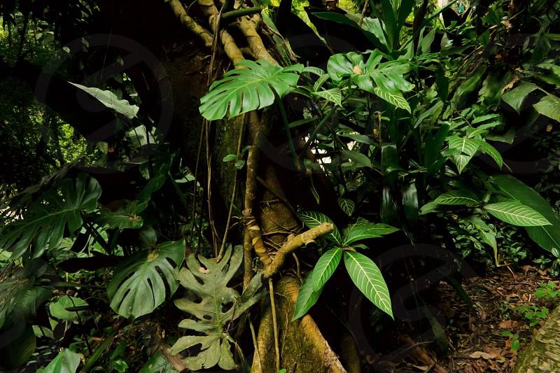 Big green leafs photo