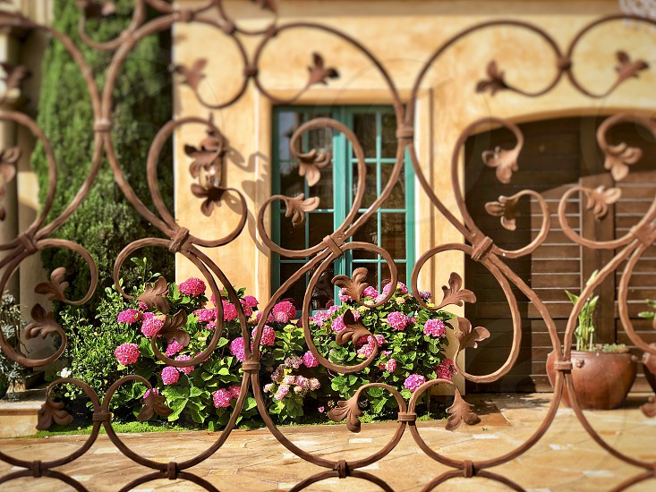 Colorful Gate Entry Front Door With Bright Hydrangeas Rustic Vintage Gates Windows photo