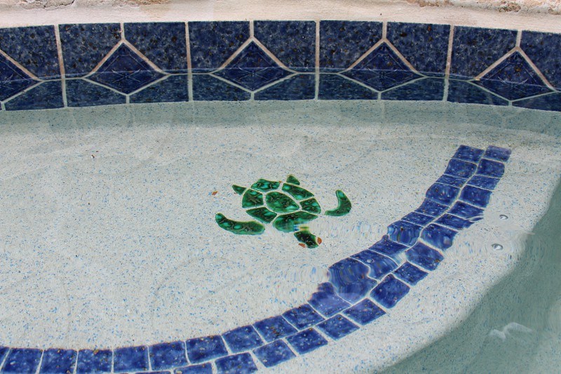 green turtle painting under swimming pool photo