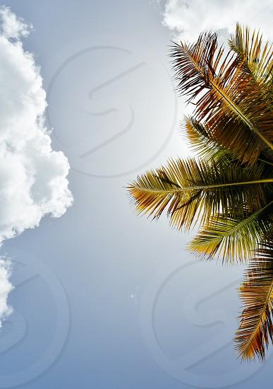 sky sun sunny summer palm tree clouds vacation photo