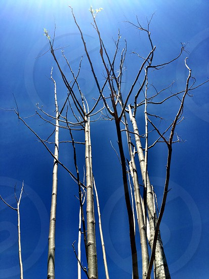 Framed;branches;trees;blue;sky;outdoor;sunny;nature; photo