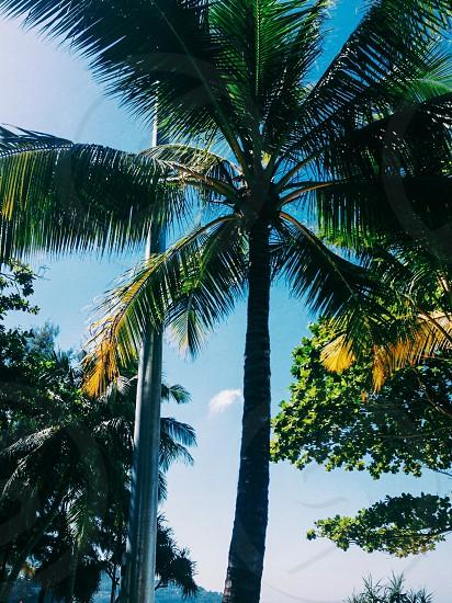 palms palm trees  skyline ocean water  green coconut palm plant tree coconut woody plant palm horizon photo