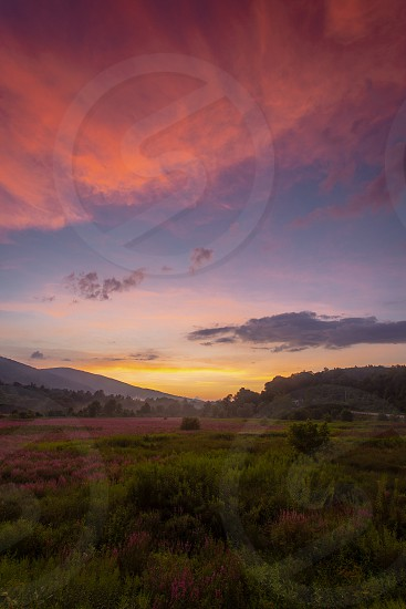 sun setting behind a field of lavender and wildflowers photo