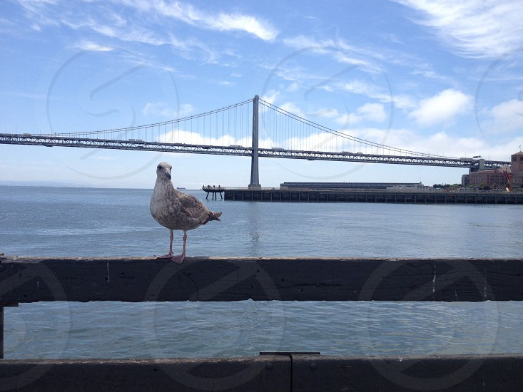 white gull perched on fence near gray suspension bridge under white clouds and blue sky during daytime photo