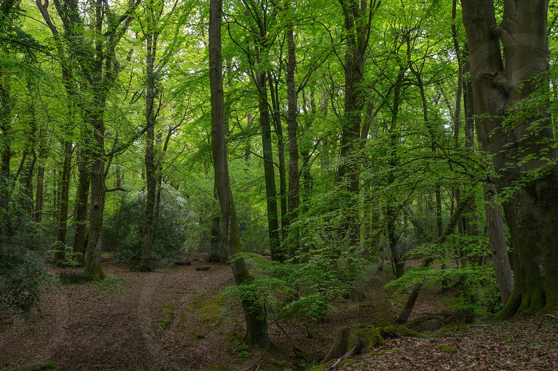 Woods trees Spring colour glow forest green leaves  photo