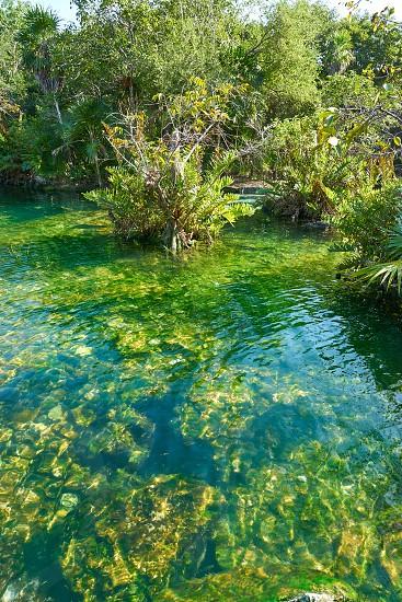 Cenote in Riviera Maya of Mayan Mexico sinkhole exposing groundwater photo