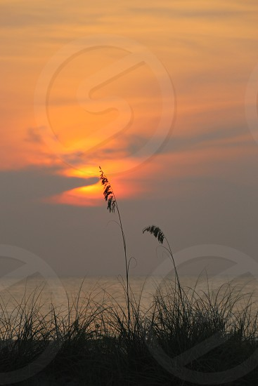 Sunrise Seagrass St. John's County Beach photo