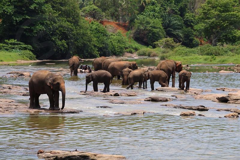 Elephants in Sri Lanka photo