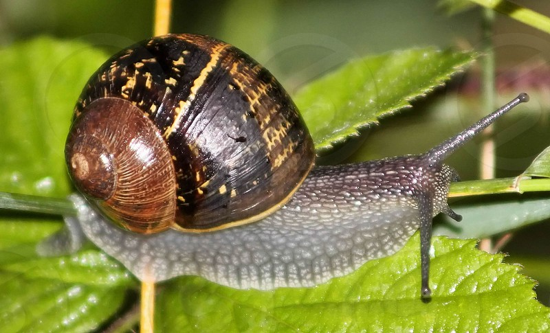 The slow life of the snail macro photo