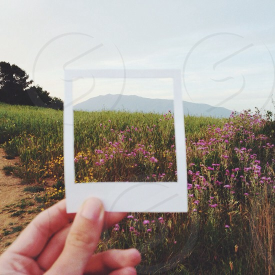 person holding pink flower photo photo